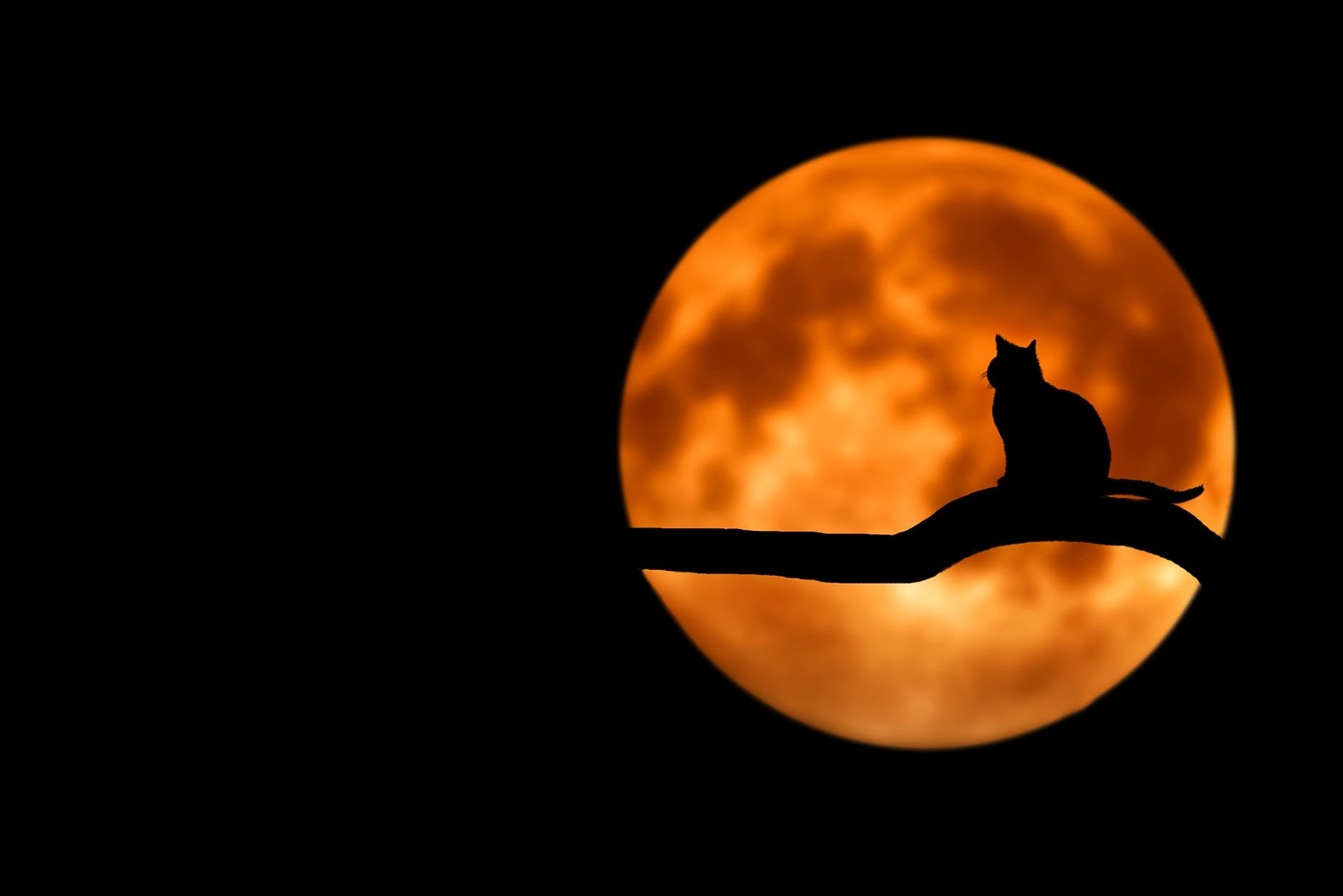 full orange moon with cat silhouetted on branch